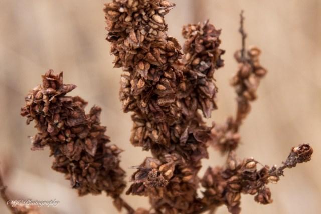 seeds-1345