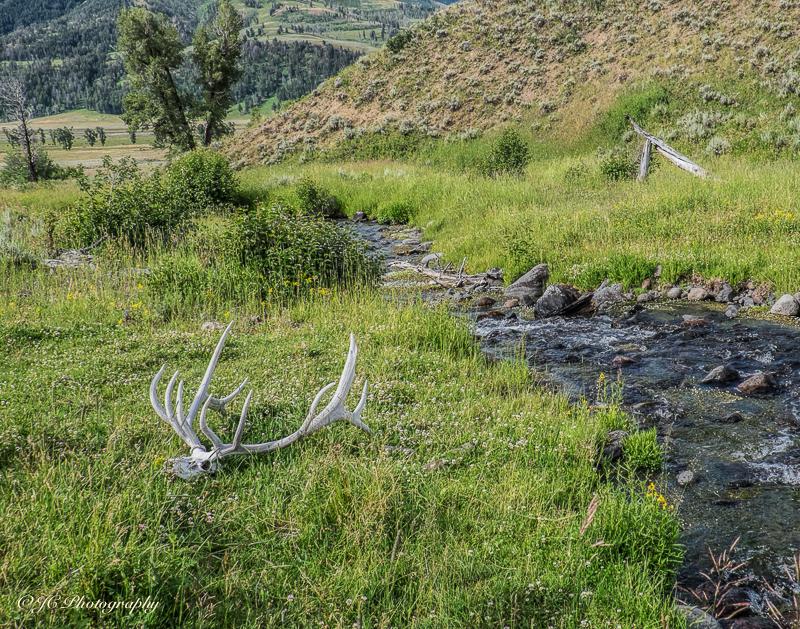 rose creek-5879-