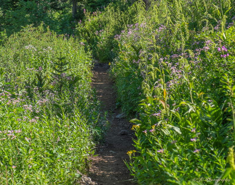 flower trail-6015
