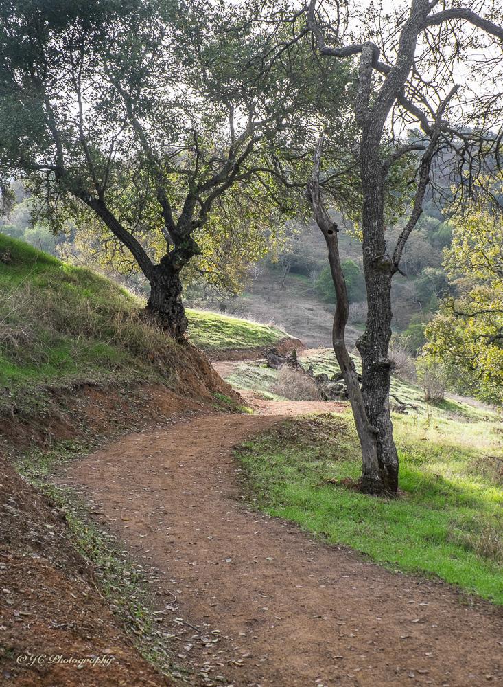 trail-3542