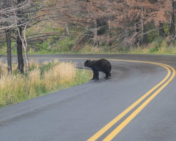 7-black-bear-4867