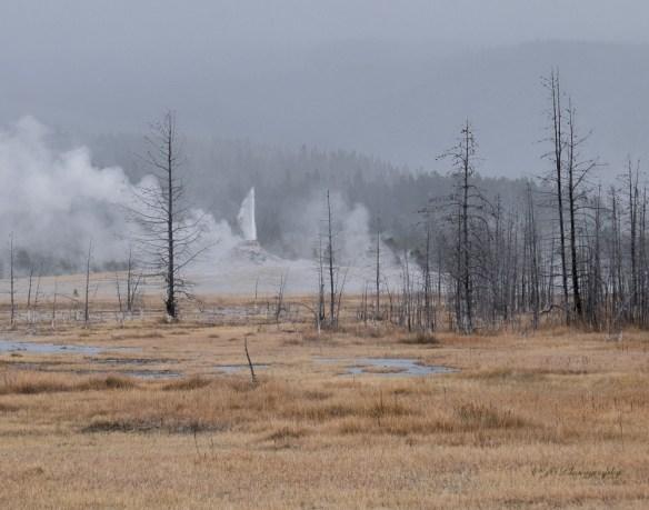 white-done-geyser