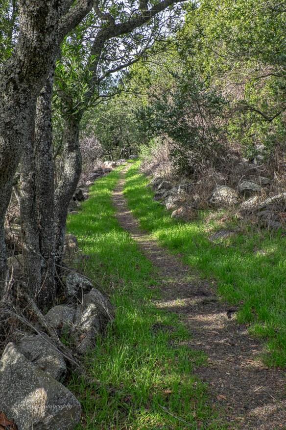25-trail
