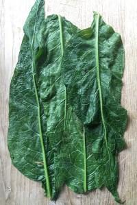 Beinwell-Blätter blanchiert