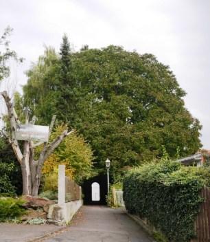 Baum mit Tür