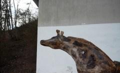 Giraffe unter der Autobahn