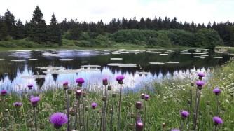 Blühender Teich