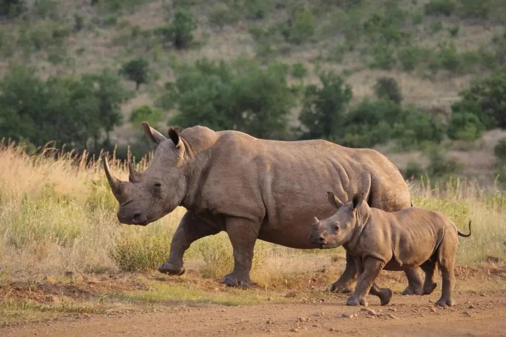 Brave Kruger Ranger Single-Handedly Takes Down Five Armed Poachers