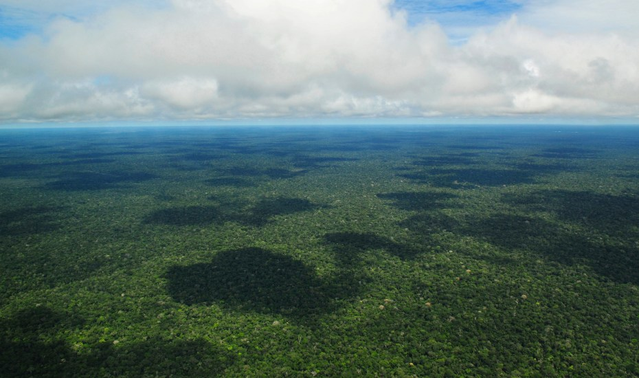 The rainforest covers 1 700 million hectares, an area the size of South America, and 6% of the Earth's surface.