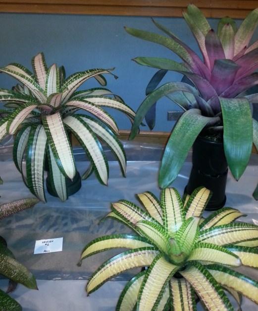Vriesea at Hawaii BSI conference