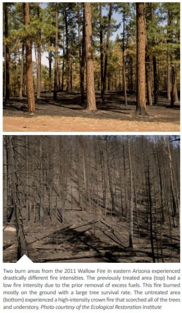 Wallow fire, two burn areas