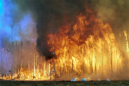 A look inside a forest fire