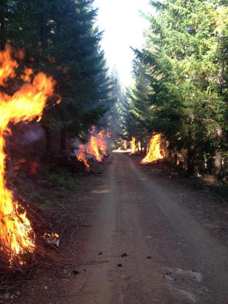 Prescribed fire Shasta-Trinity National Forest