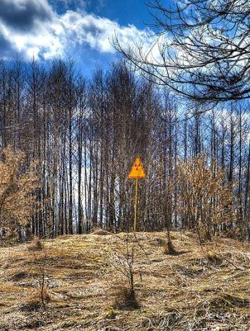 Chernobyl vegetation