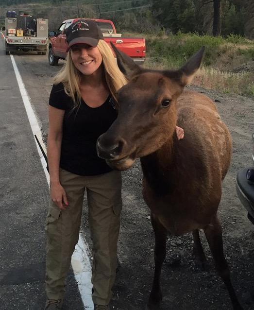 Elk at fire