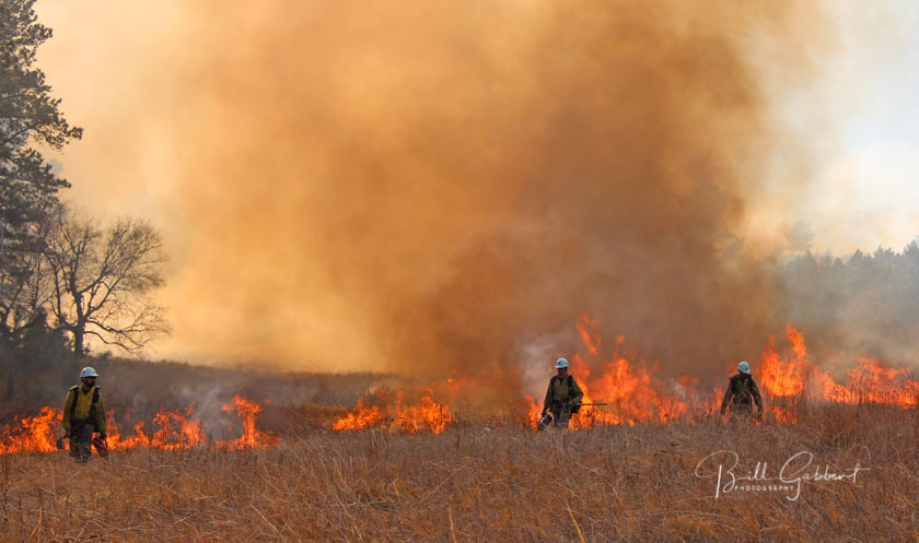 Revisiting the Norbeck prescribed fire
