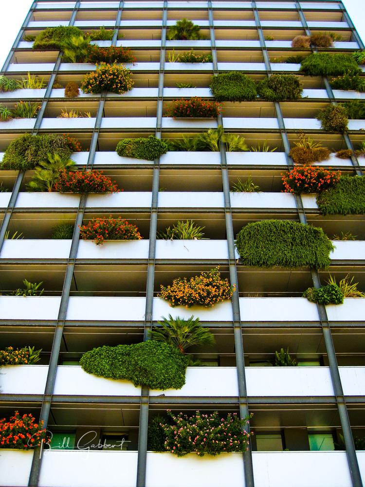 lisbon portugal plants window