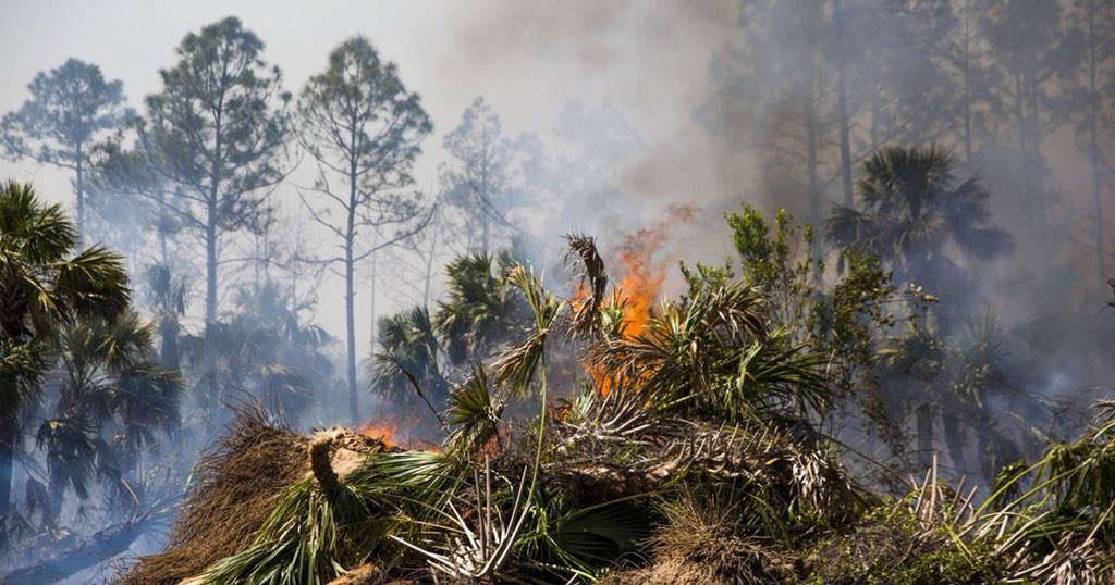 Florida wildfire season underway; crews working multiple lightning-caused fires