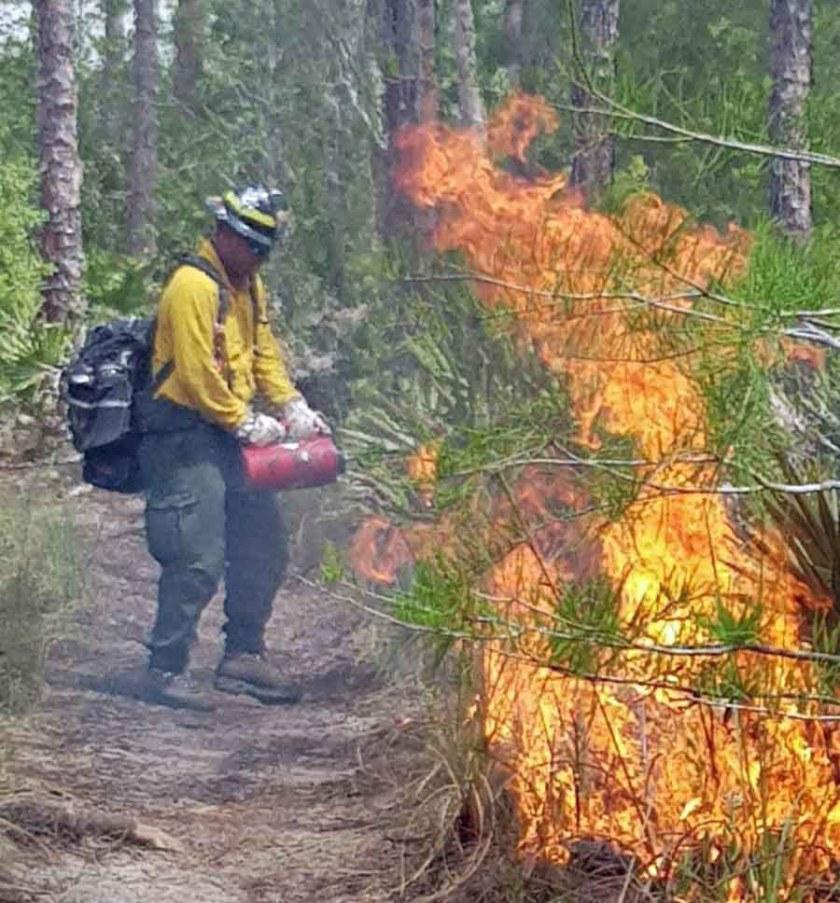 avian complex fire wildfire