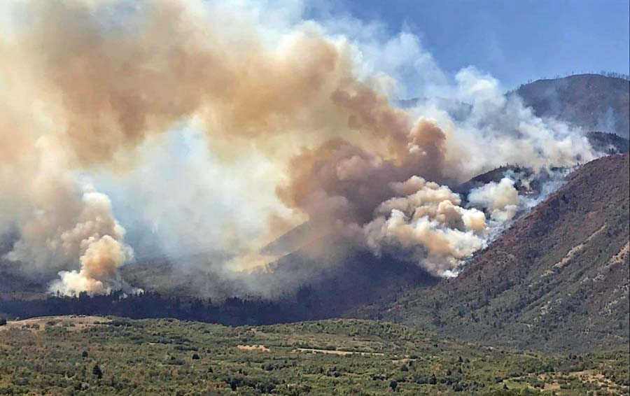 217 scientists sign letter opposing logging as a response to wildfires
