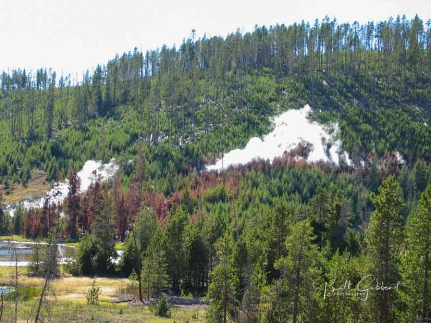 yellowstone, thermal feature, trees,