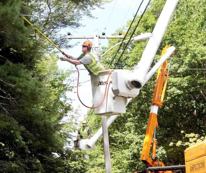 trim trees power line