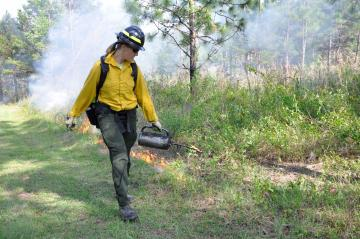 3-d fuels vegetation wildfire