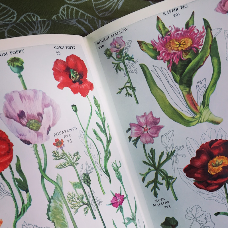 illustrated wildflower guide