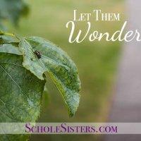 Let Them Wonder