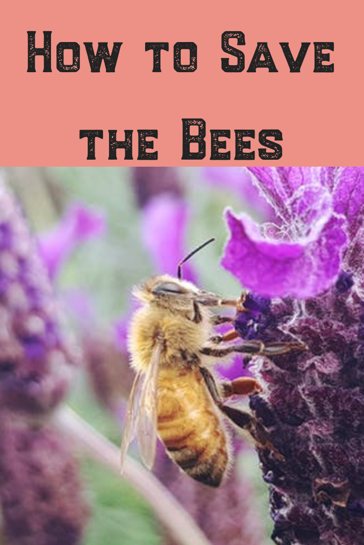 We all know bees are vital to raising crops and our general life cycle. This article focuses on tips and ideas to help save pollinators and their hives! #bees #savethebees #pollinators #tips #ideas #gardening #garden #pollen #beehive