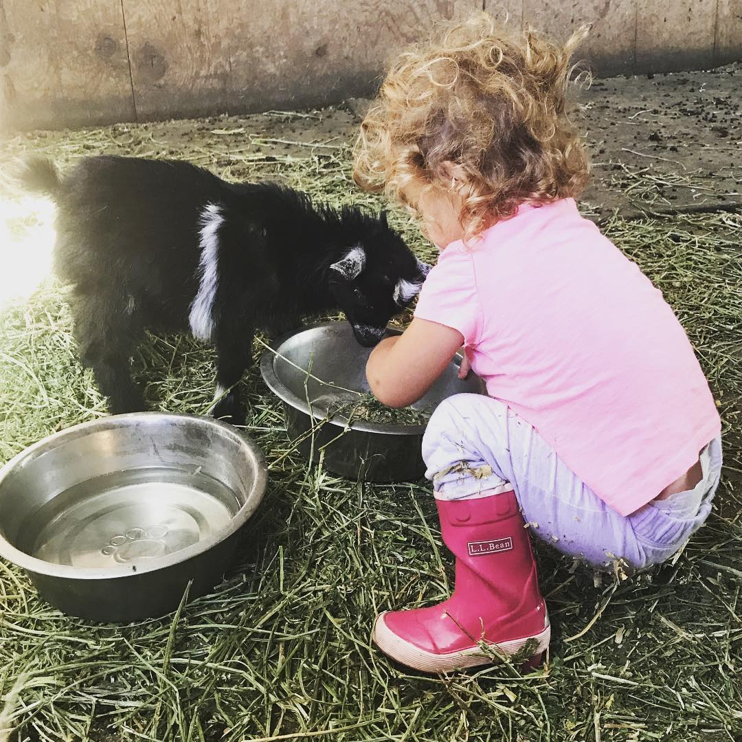 Little girl feeding the baby goat