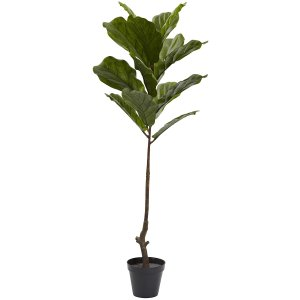 Fiddle Leaf Fig Tree Houseplant