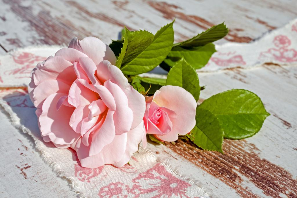 8 secrets to grow gorgeous roses