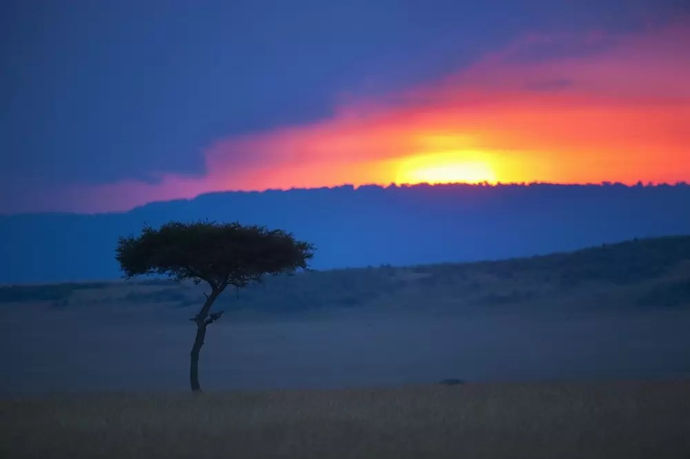Kenya, Maasai Mara Game Reserve, savannah with single tree at sunset