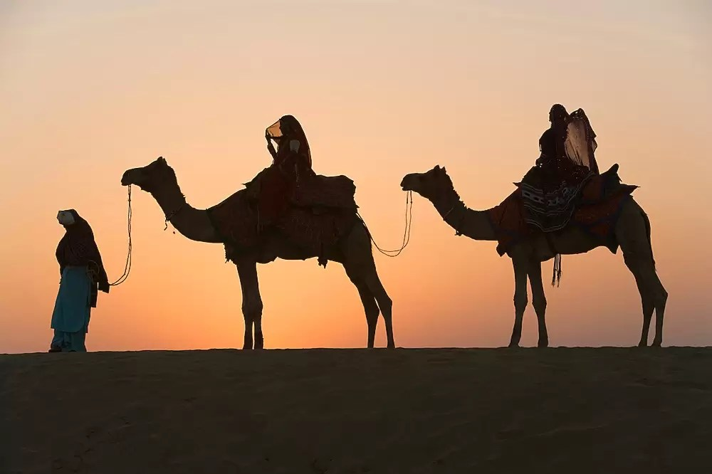 Rajasthani dancers riding on camels