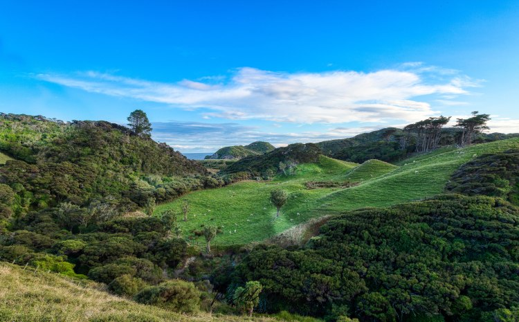 Hiking track to Wharariki Beach.