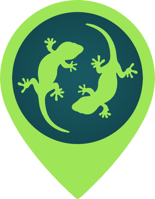 Wild Geckos