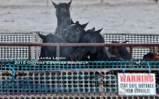Steam rising as horses are loaded to be transported off the range in the freezing morning