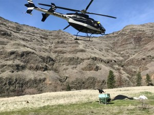 Reseeding efforts after spraying yellow starthistle along the Grande Ronde River