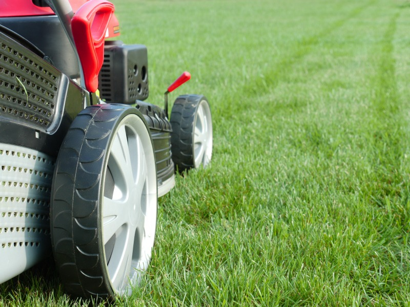 spring lawn care, turf sunshine coast