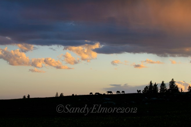 Sunset with the horses, July 2011