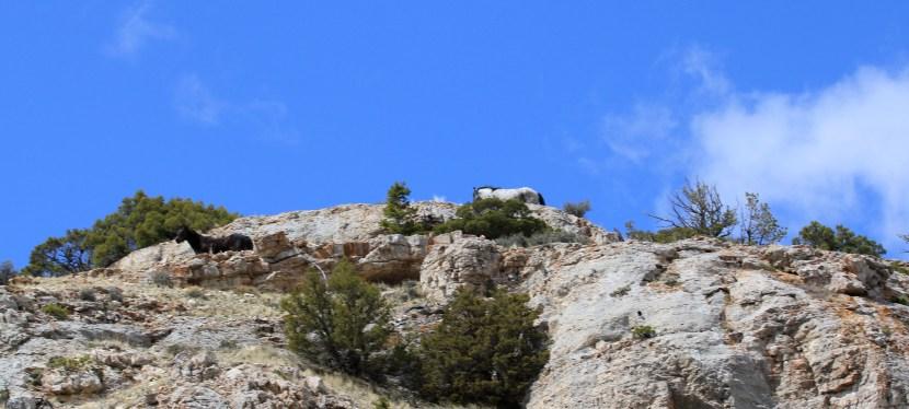Sykes Ridge, April 16, 2012