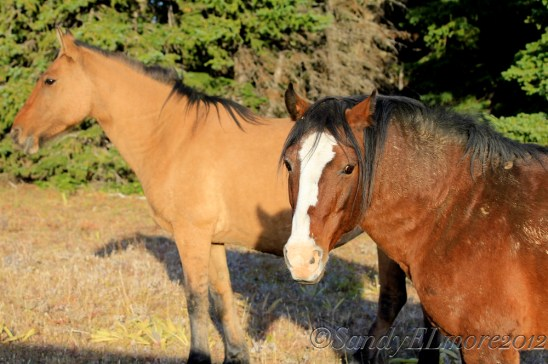 Starman and his mare Rosarita, September 2010.