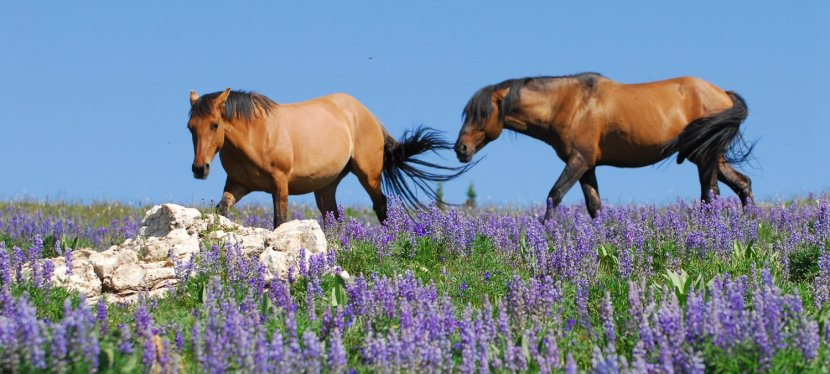 Two Pryor Horses looking for a new home.