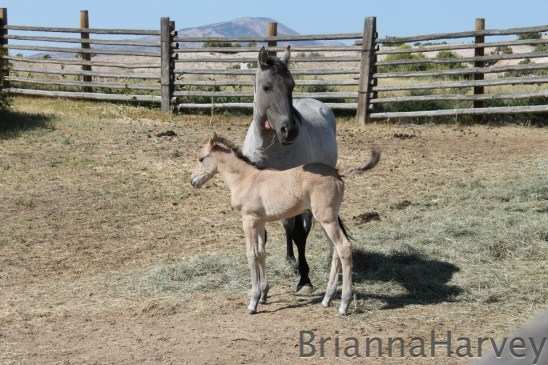 Jicarilla and Maryanna, September 7, 2012.  Photo by Brianna Harvey