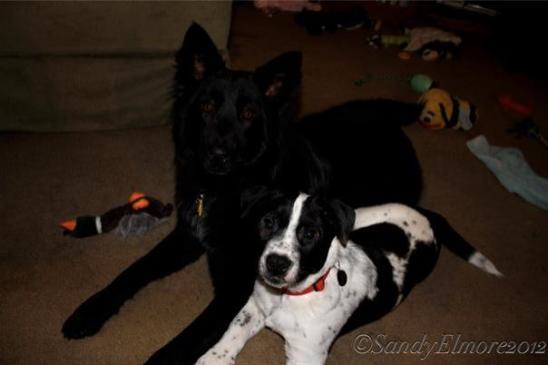 Nyah and Jasper, December, 2012