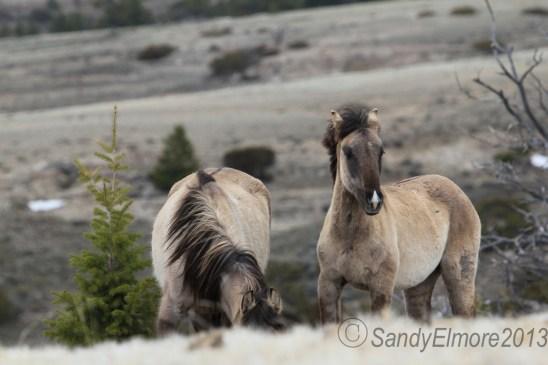 Fresia and Montana