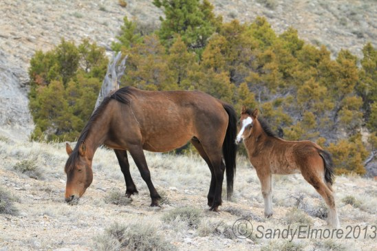 Waif and her colt, Norte, April 28, 2013