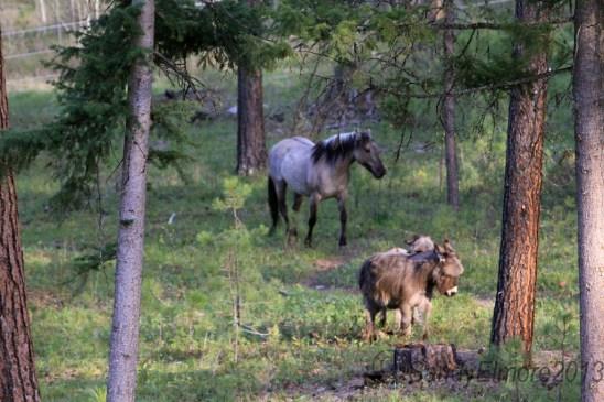 Valerosa and the burro boys