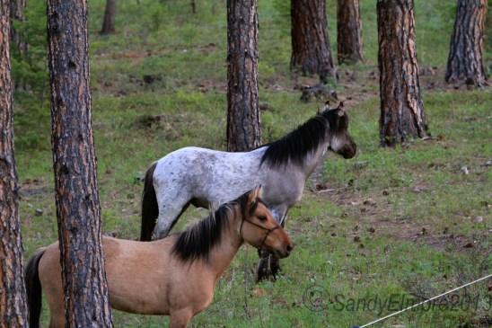 Kiowa and Kootenai